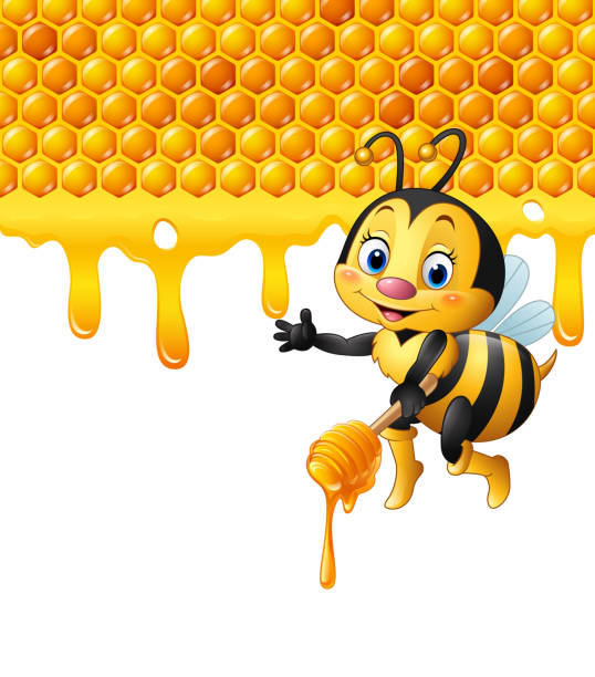 Vector Illustration of Cartoon bee holding dipper with honeycomb and honey dripping