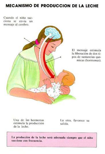 embarazo 3